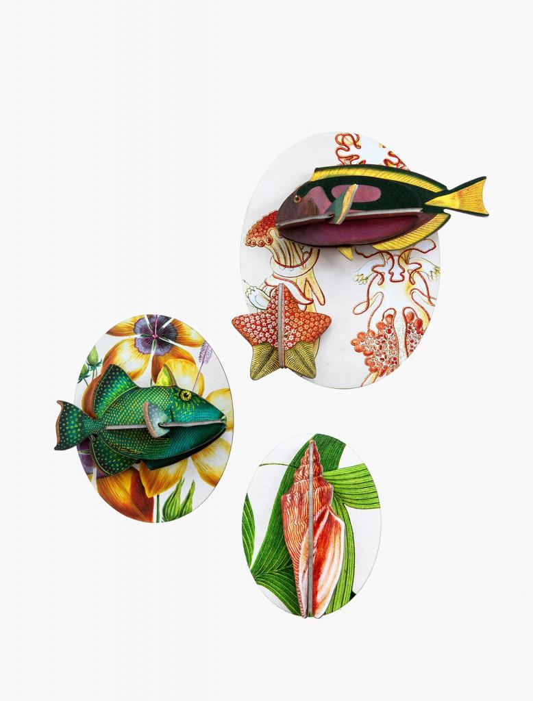 Décoration boîte collector poissons volume 1 - Studio Roof