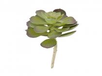 Plante artificielle succulente - Present time
