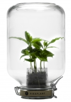 Serre autonome Jar mini caféier - Pikaplant