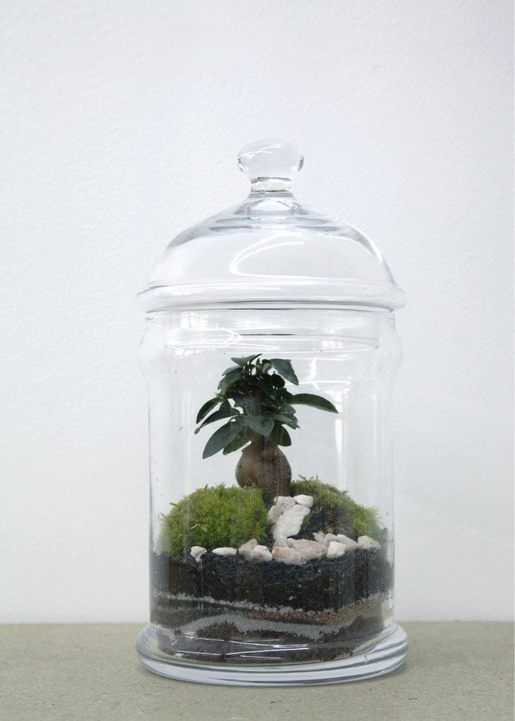 SERRE DOME FICUS - GREEN FACTORY