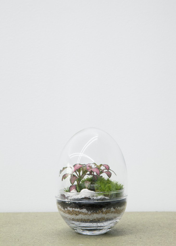 SERRE JURASSI LAB PLANTE D\'ACCOMPAGNEMENT M - GREEN FACTORY