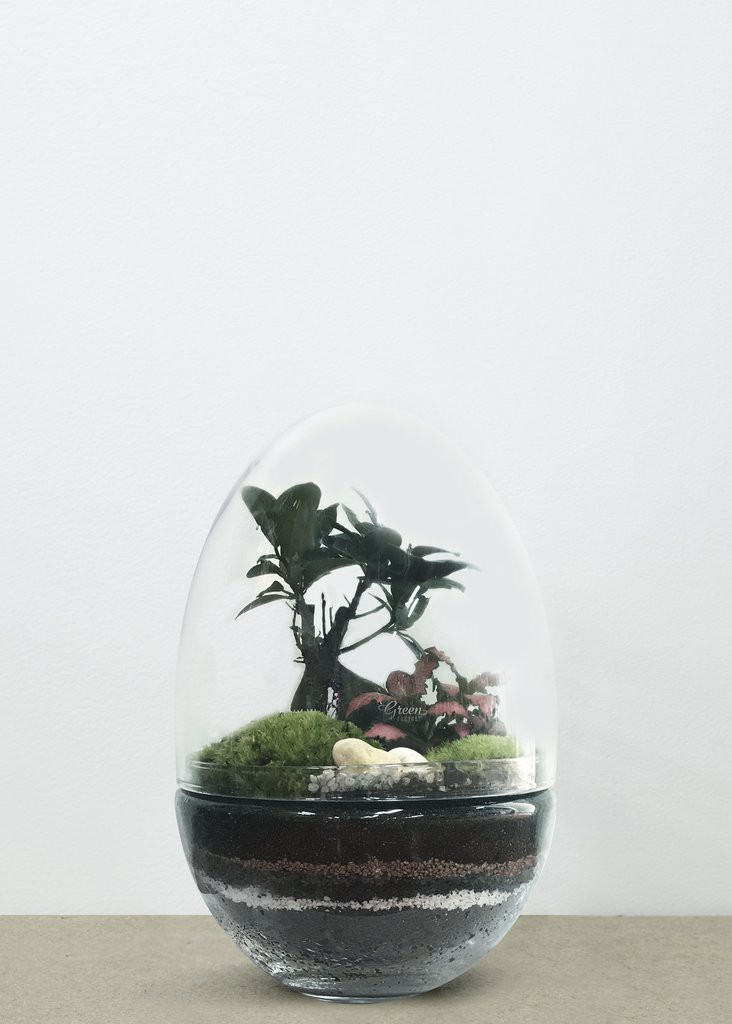 SERRE JURASSIC LAB FICUS XL - GREEN FACTORY